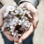 Bestattungsdienst Kopp Alles aus einer Hand